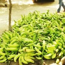 Plátanos recién cortados