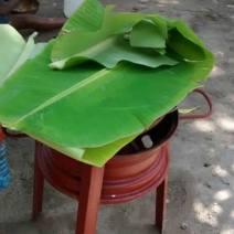 Tapando con hojas de platano