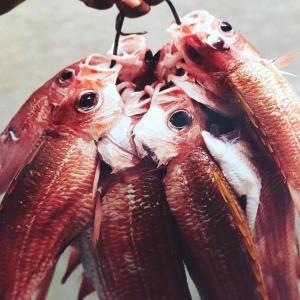 Atado de pescados