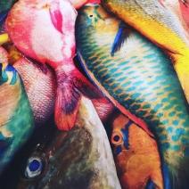 Pescados dominicanos